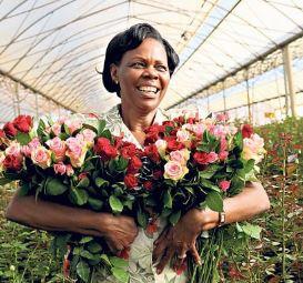 Rose a San Valentino: veleni e pesticidi in Kenya