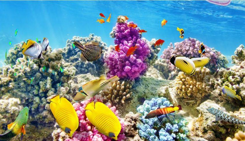 """Turismo mondiale: """"Bisogna ridurre le emissioni di gas serra"""""""