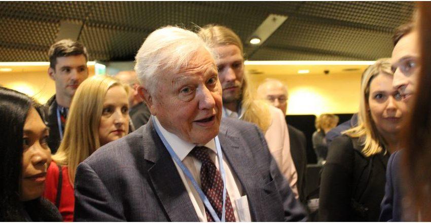 A lezione con David Attenborough: partecipazione attiva ai tempi dei social