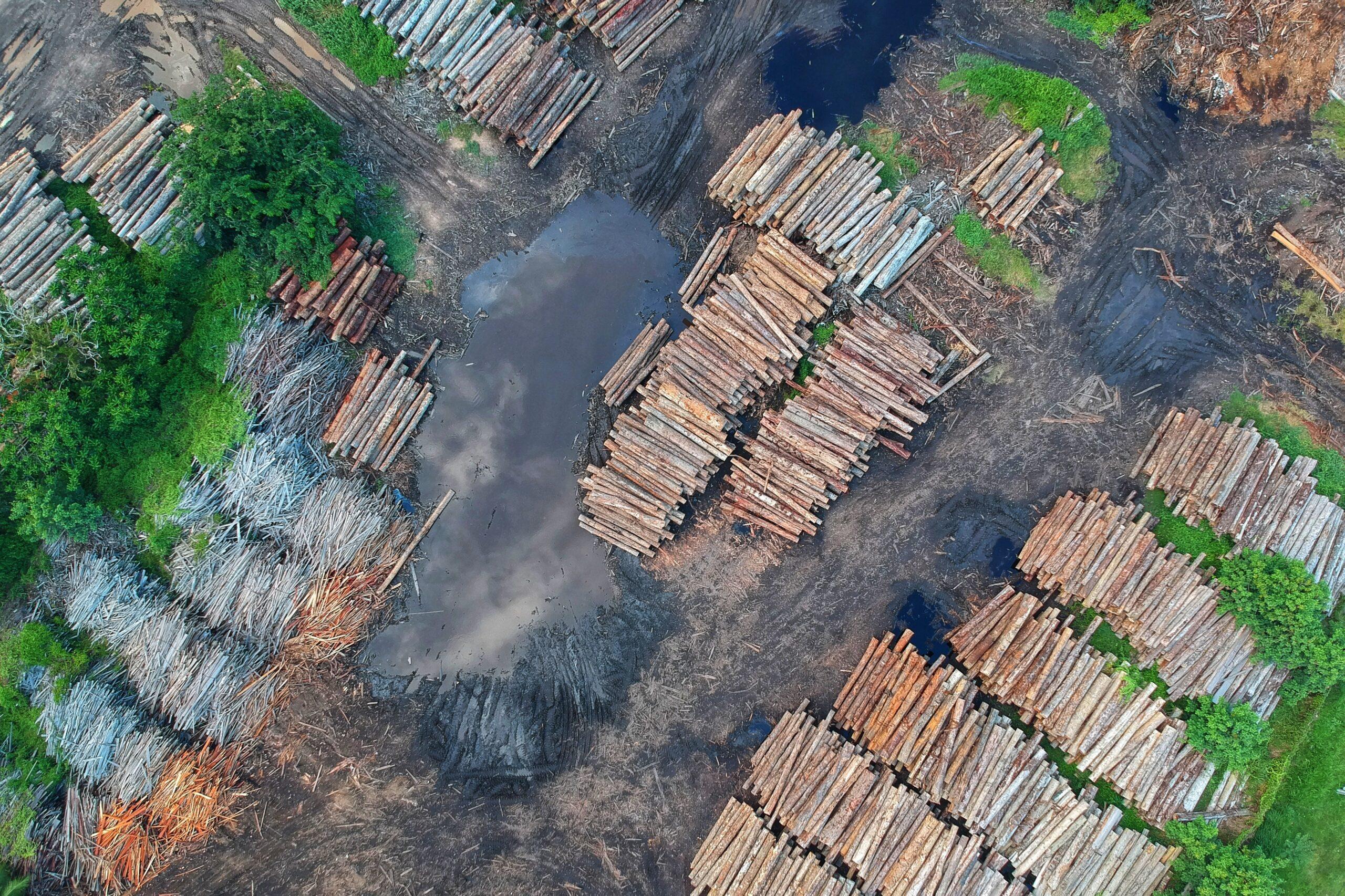 Carne e soia dall'Amazzonia disboscata verso l'Europa