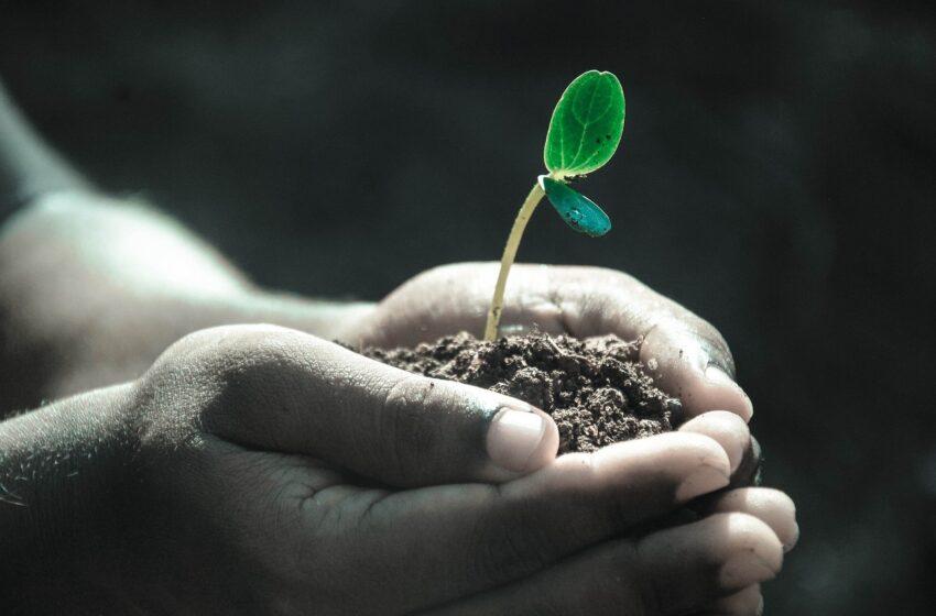 Giornata Mondiale del Suolo: proteggiamo la sua biodiversità