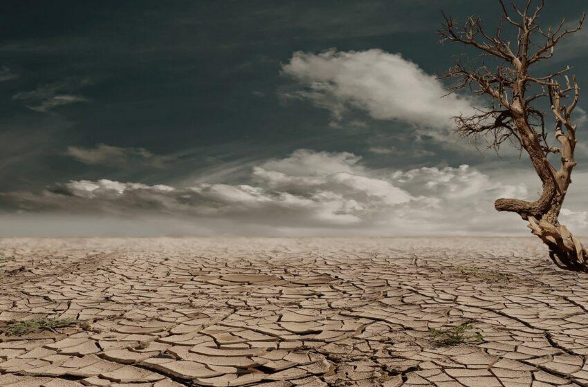 2020: anno record per le temperature globali. L'emergenza climatica non si arresta