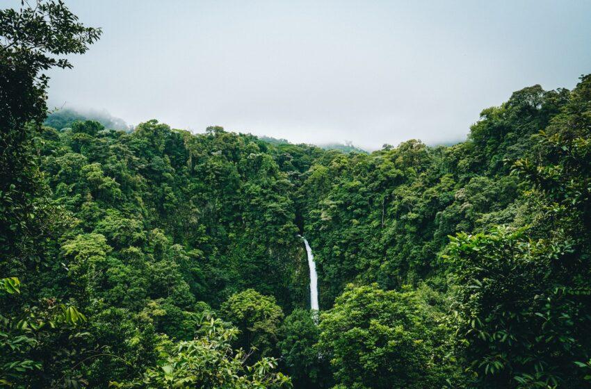 Chi ammazza l'Amazzonia? Srotoliamo il filo che ci unisce alla foresta