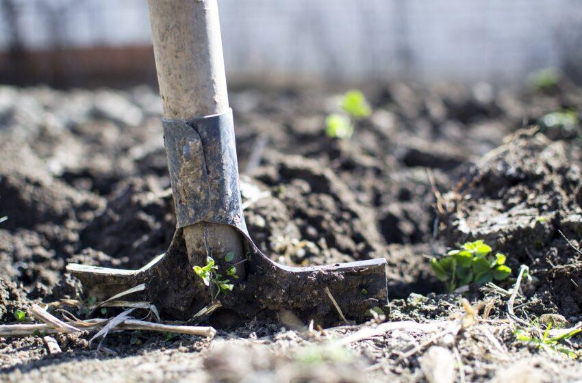 Il valore aggiunto dell'agricoltura sociale