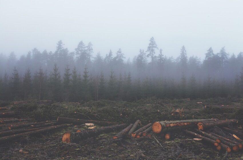 La difesa delle foreste è salute pubblica globale